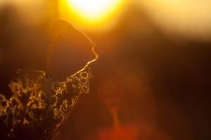 Licenide al tramonto