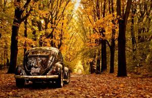 autumn-volkswagen-beetle-wallpaper